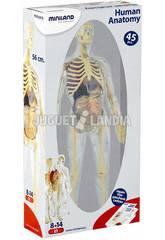Jogo Anatomia Humana Miniland 99060