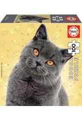 Puzzle Junior 100 Gato British Shorthair Educa 18807